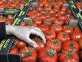 Rusiyanın pomidor bazarı uğrunda savaş: Azərbaycan nə etməlidir? (TƏHLİL)
